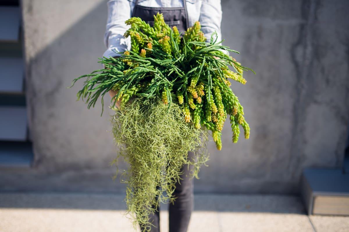 alex-havret-photographe-lyon-culinaire-corporate-entreprise-evenementiel-modul-paysageinterieur-1412